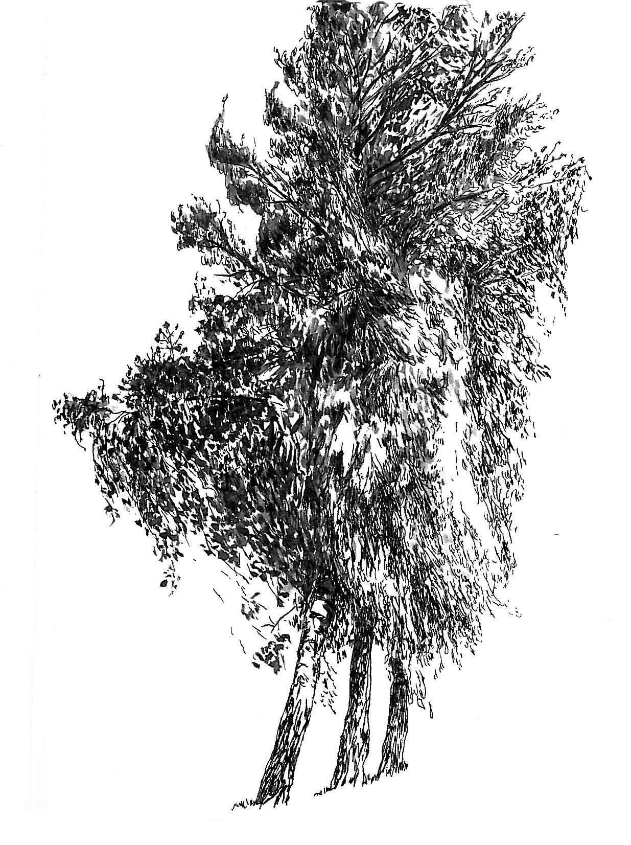 Illustration : Marielle Durand